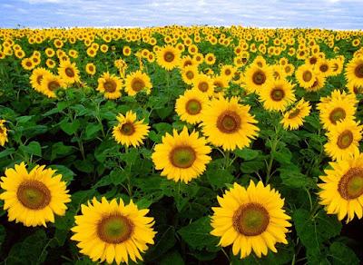 Gambar Jenis Bunga Terindah di Dunia