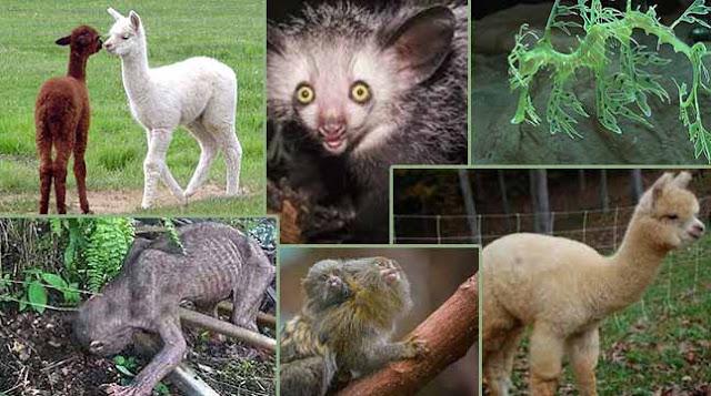 All the strange creatures of the world,বিশ্বের অদ্ভুত সব প্রাণী গুলো