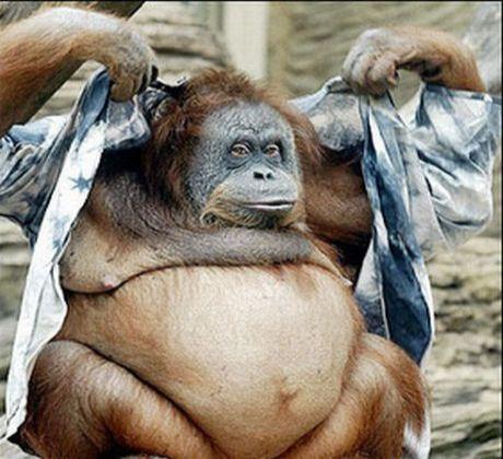 hilarious monkeys - photo #13