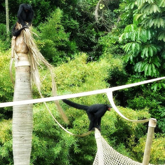 Macacos da Cara Vermelha, no Mundo Animal, no Beto Carrero World