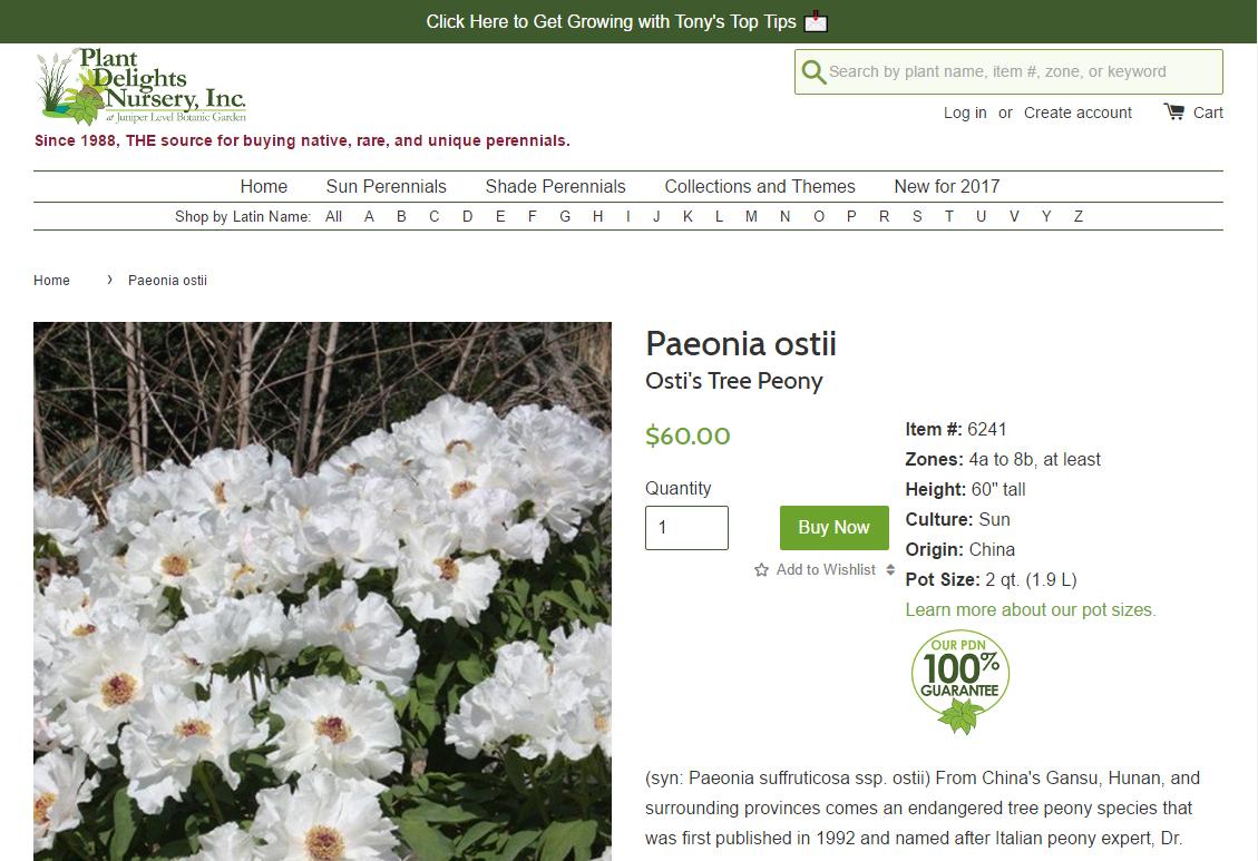 Southern Peony 2017 Tree Paeonia Ostii At Plant