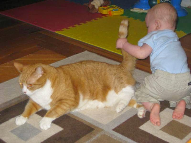 Foto bayi lucu menarik ekor kucing