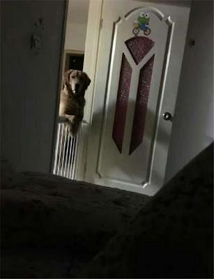 Anjing Ini Selalu Awasi Majikannya Saat Malam Hari