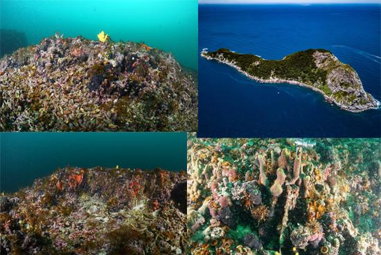 Recife Corais Ilha Queimada Grande - Ilha das Cobras