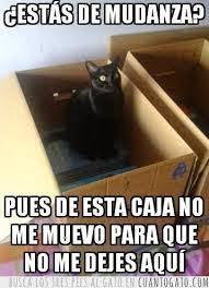 mudanza-gato-cambio
