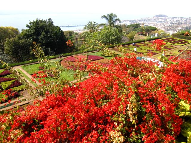 Botanical Garden Madeira