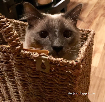 Fergus the kitten in his basket