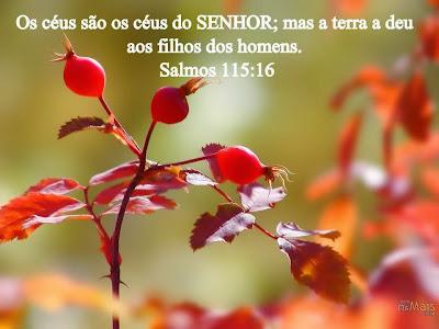 Salmo do dia - Salmo 115