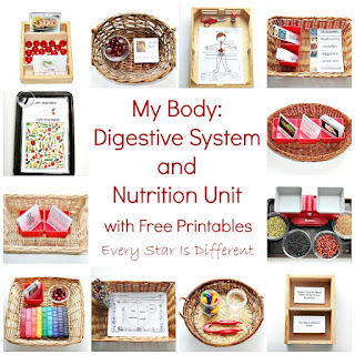 My Body:  Digestive System and Nutrition Unit with free Printables