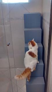 gatos saindo pela janela