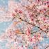 Ikigai and the Path to Purpose