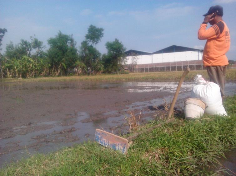 alat dan bahan menebar benih padi