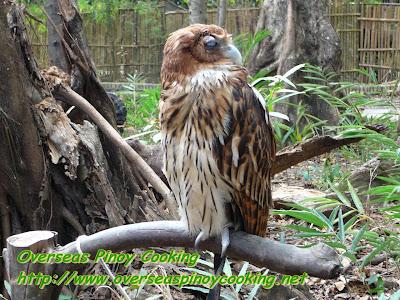 Bird Trill