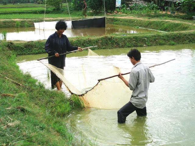 Aquaculture familiale au Cambodge. Photographie WorldFish (cc)