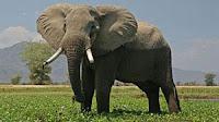 Selamat datang kembali di blog sederhana ini Soal IPA Kelas 6 Bab 1 Ciri-ciri Khusus Makhluk Hidup dan Lingkungannya