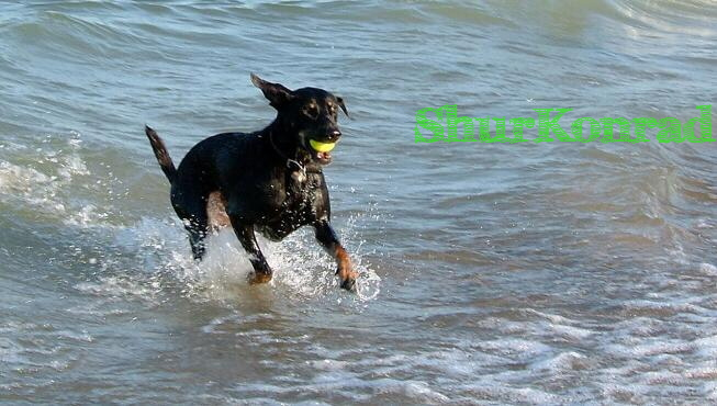playas-perros- Argentina dog puppy cachorro ShurKonrad 2