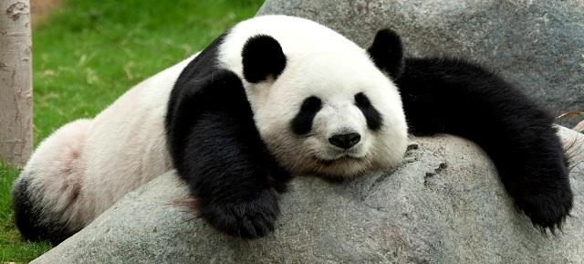 Cara Sederhana Sembuhkan Mata Panda Menggunakan Lemon