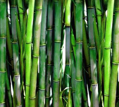 Introduction to Bamboo -- Bamboo