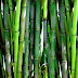 Introduction to Bamboo