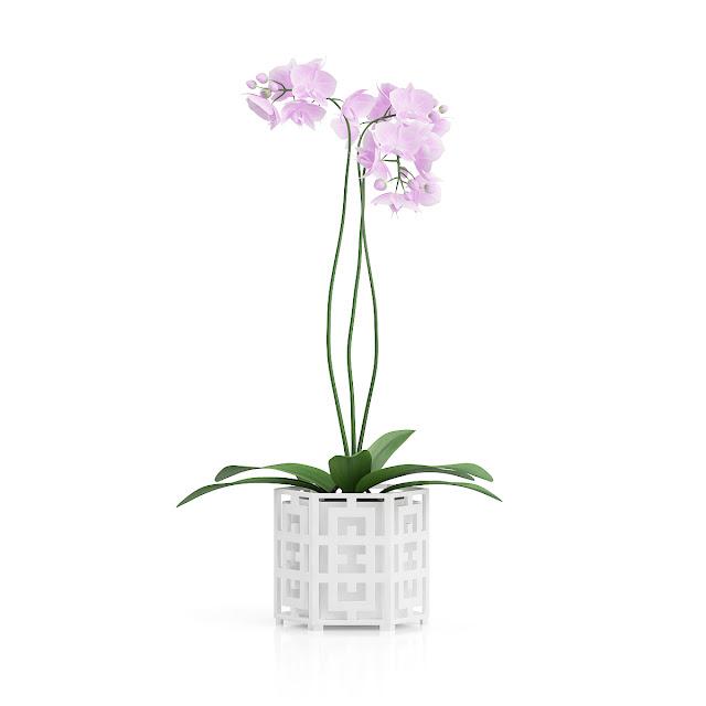 3D model free -  Plants_31