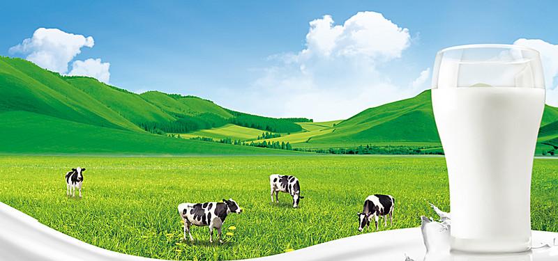 Manfaat  Dan Kandungan Gizi Susu Sapi Untuk Kesehatan