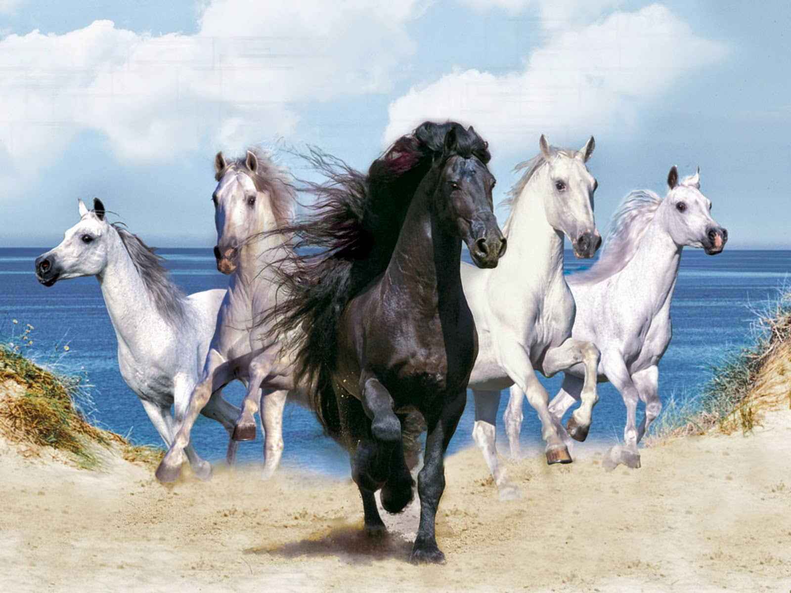 fantasy Beautiful horses