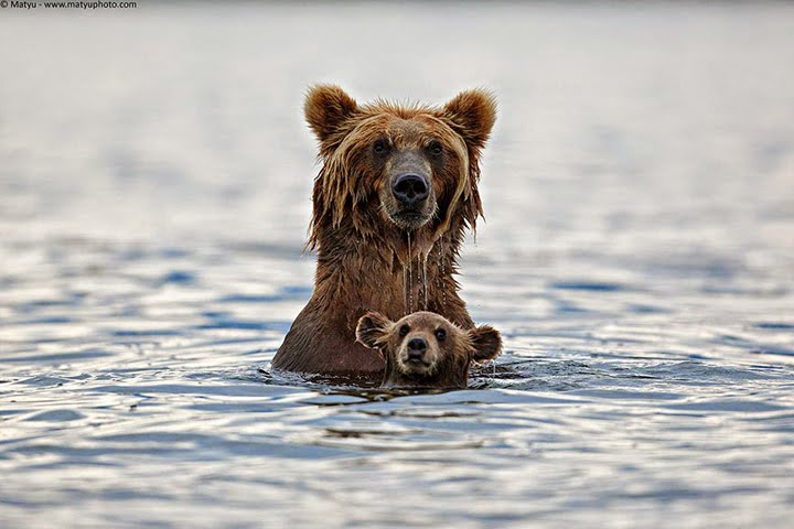 vahşi hayvan resimleri