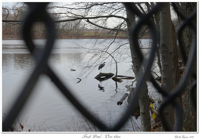 Fresh Pond: Over there