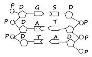 Biologi Gonzaga Bab Substansi Genetik Bologi Kelas Xii