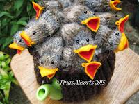 Tina's Allsorts, Baby Bird Tea Cosie