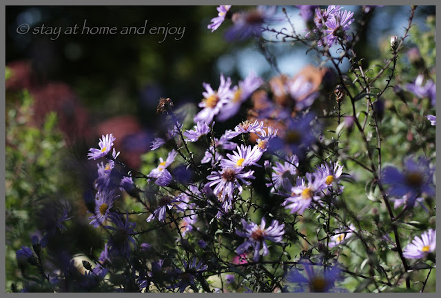 Herbst - stay at home and enjoy