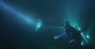 Έκανε νυχτερινή κατάδυση όταν είδε ένα δελφίνι να τον πλησιάζει. Η συνέχεια; Θα σας κόψει την ανάσα!