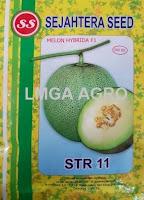benih melon tahan virus, STR 11, melon STR 11, benih melon STR 11