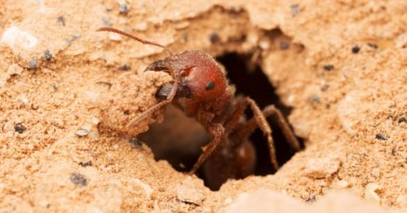Semut Mungkin Menjadi Solusi Untuk Mengatasi Pemanasan Global