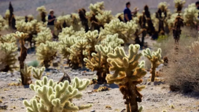 Cholla Cactus Garden Vacation Packages, Flight and Hotel Deals