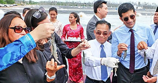 Brunei set to be Blue Shrimp World's Largest Producer