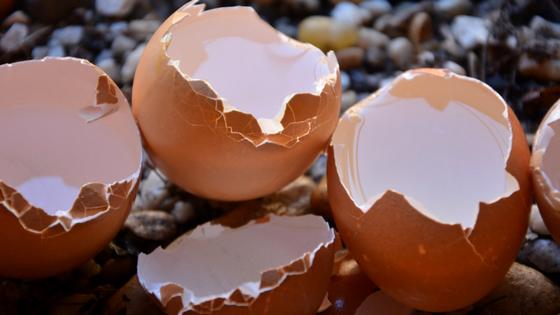 manfaat dan bahaya cangkang telur
