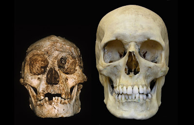 Mystery 'hobbits' not humans like us: study