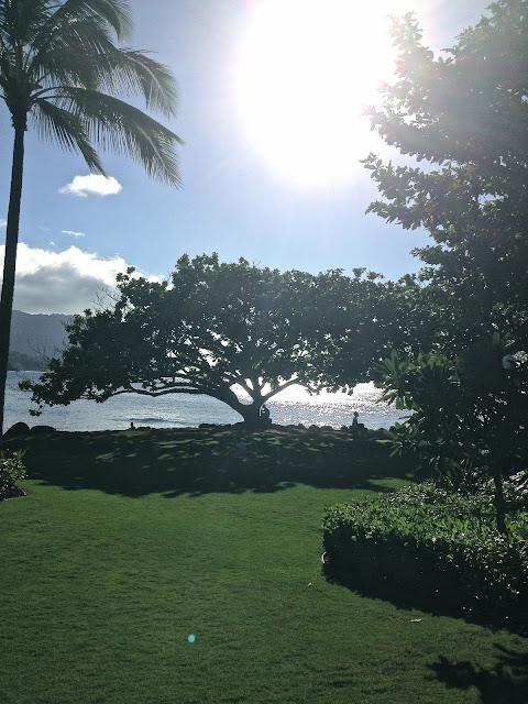 Princeville Kauai ocean Hawaii green grass