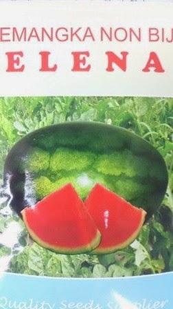 buah besar, daging merah, buah Lonjong, semangka non biji, semangka inul, juve, Elena, prime,
