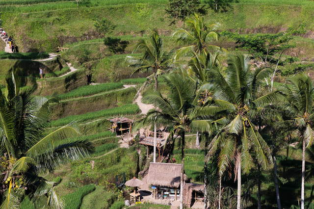 Ubud Bali Things to do tegalalang rice terrace cultivation ubud bali indonesia