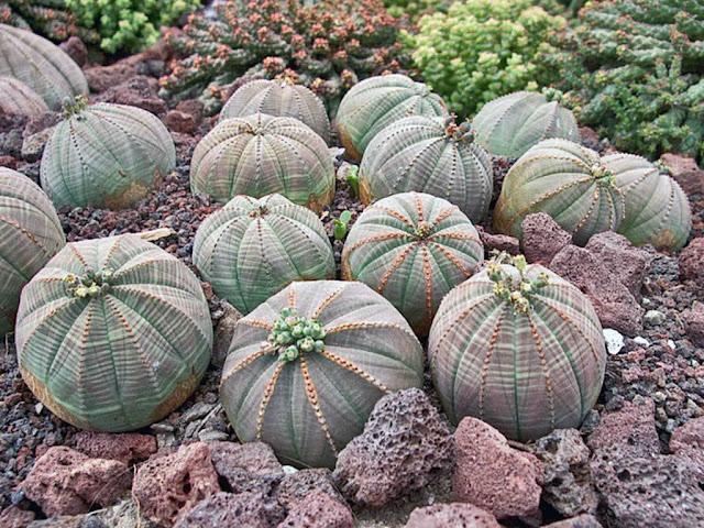 5 Tumbuhan paling langka di dunia