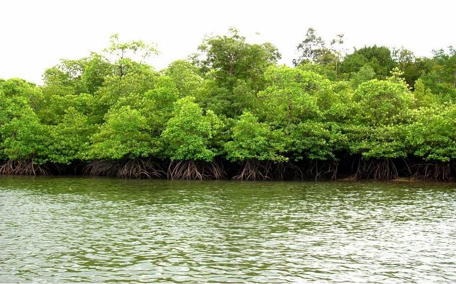 Potensi Sumber Daya Hutan dan Tambang