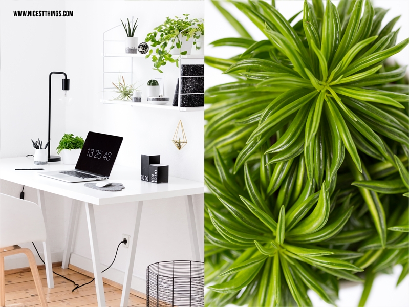 urban jungle deko im home office pflanzen deko am schreibtisch nicest things. Black Bedroom Furniture Sets. Home Design Ideas