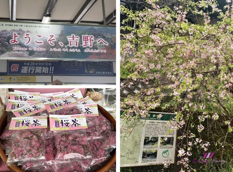 yoshino japan most famous cherry blossom spot