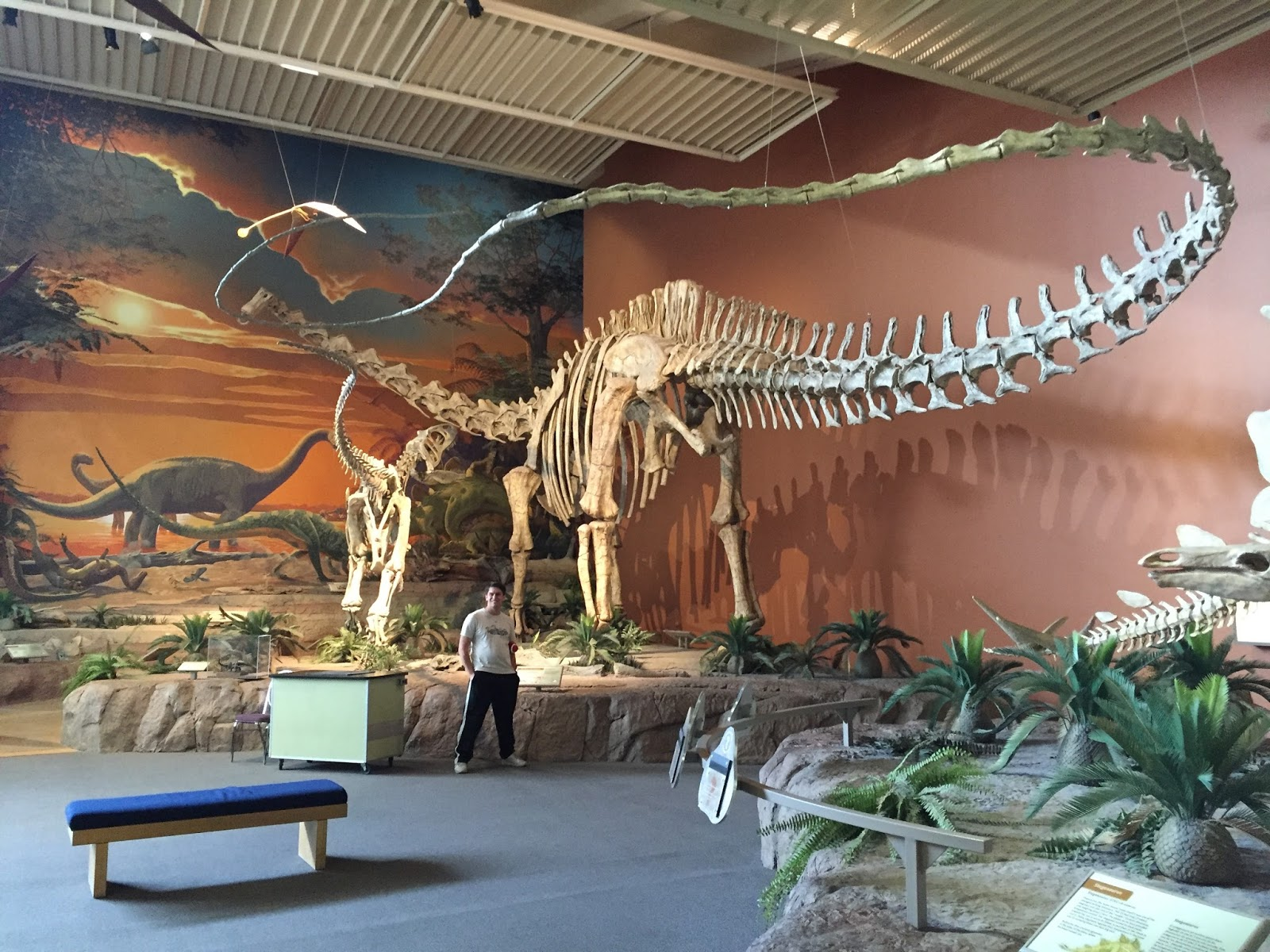 Stuckasaurus: New Mexico Museum of Natural History and Science
