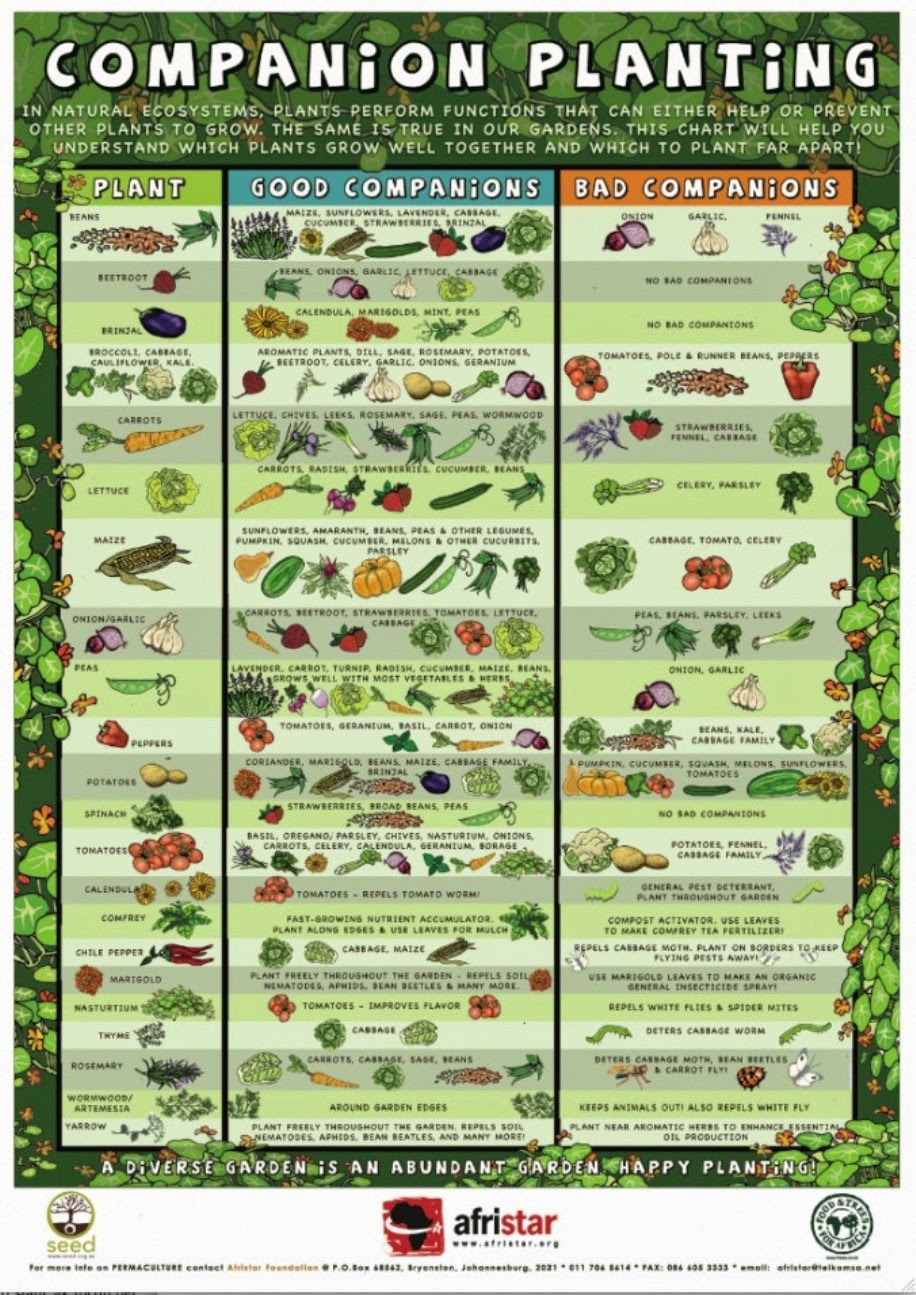 Raised Garden Planting Guide