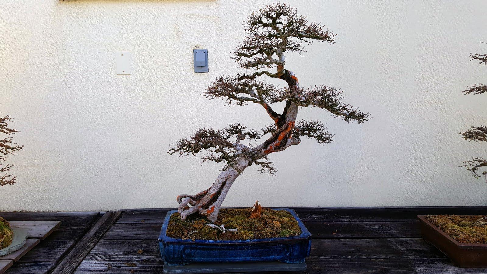 Self-balancing binary search tree