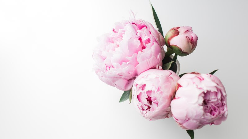 Bouquet of Peonies 2