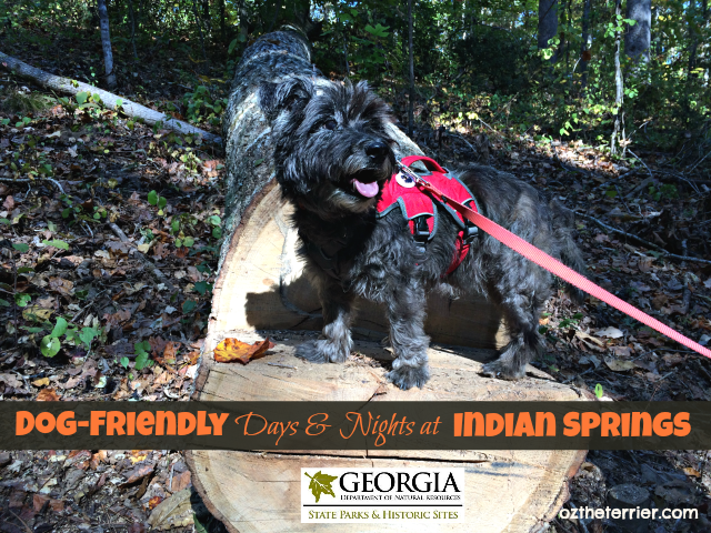 spend dog-friendly days & nights at indian springs state park, georgia